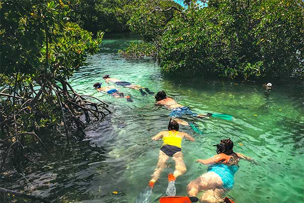 Snorkeling The Backcountry Mangroves
